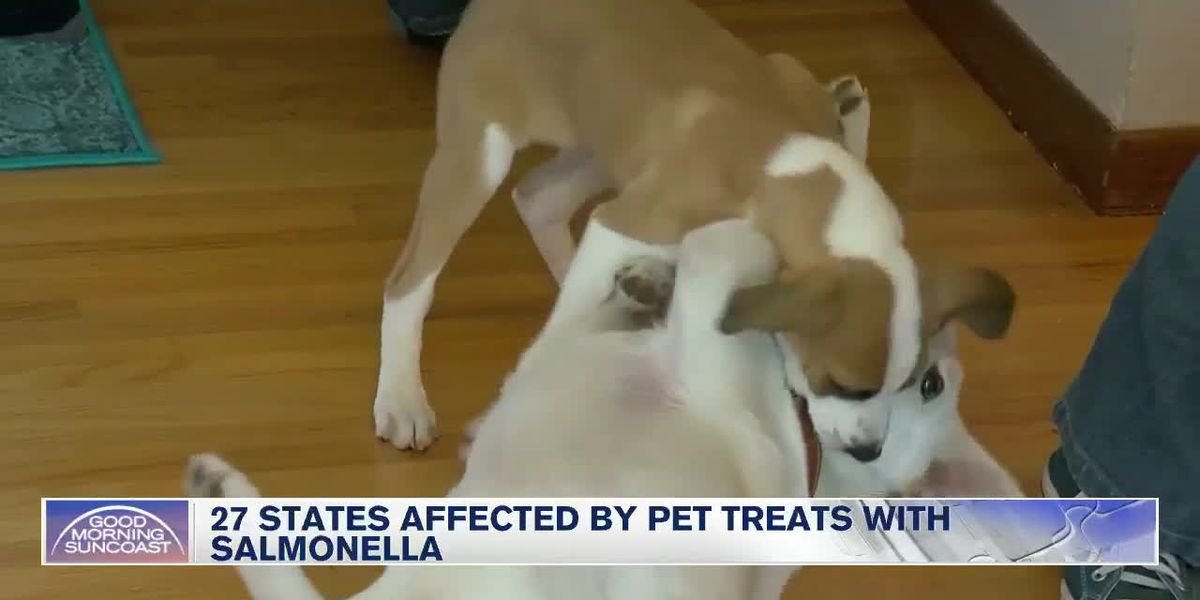 Florida is one of 27 states that have Salmonella infected pet treats