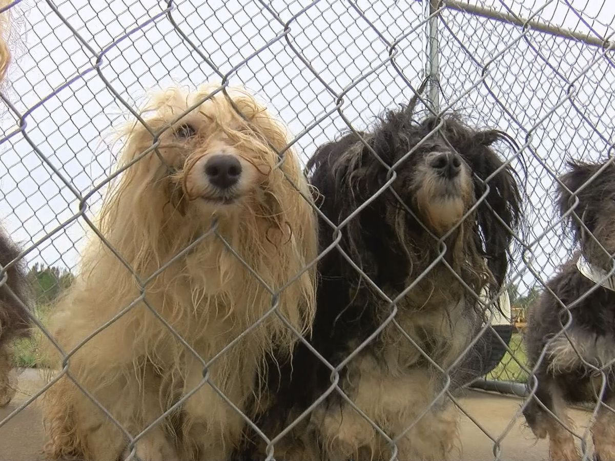 Manatee County discuss ordinance to ban retail sales of puppies and kittens