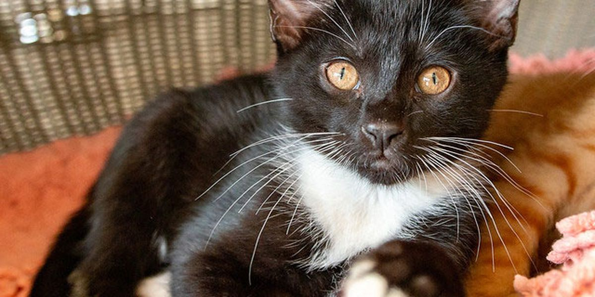Florida senator files bill to outlaw declawing most cats
