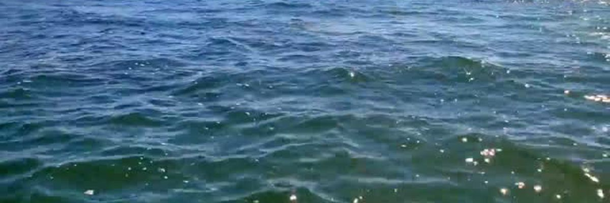 VIDEO: Giant school of fish swimming along Siesta Key