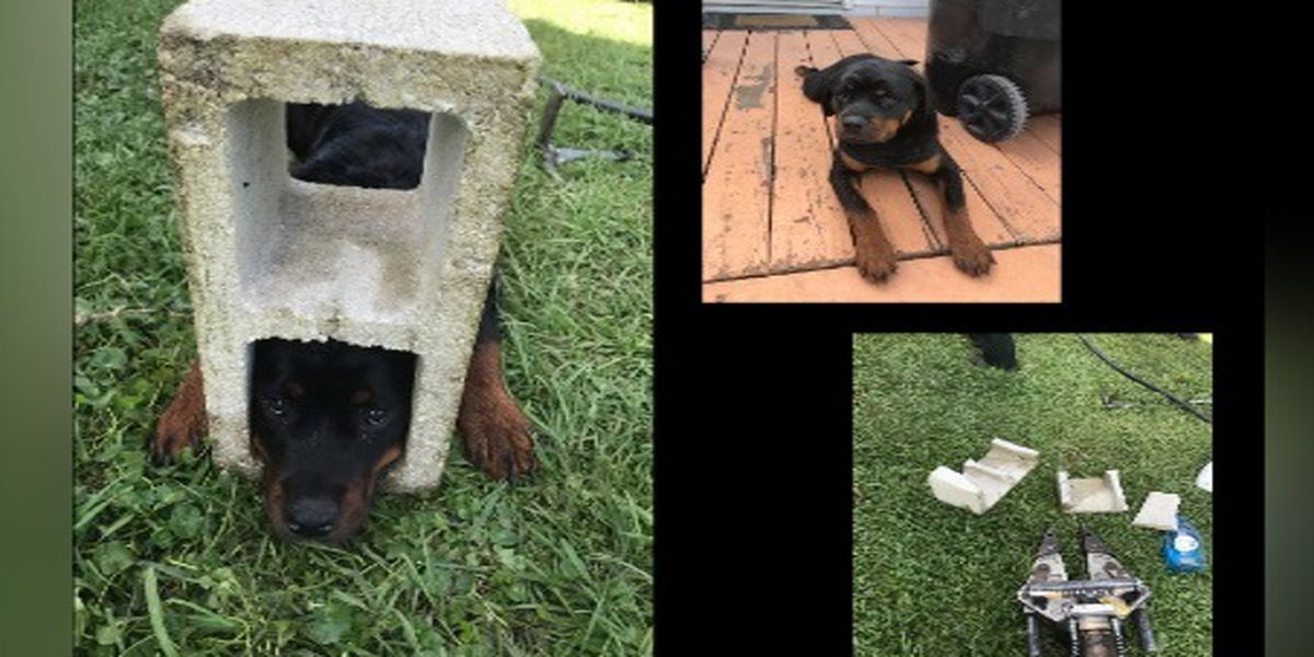 'Jaws of life' used to free dog's head from cinder block