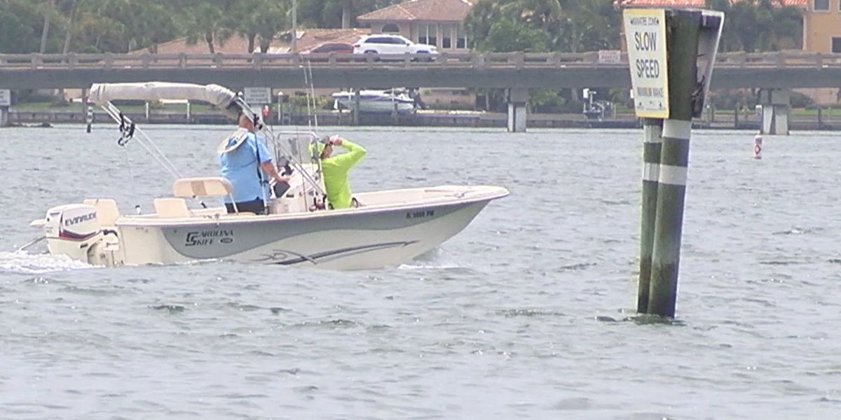 The number of manatees being killed by boats is steadily increasing in Florida