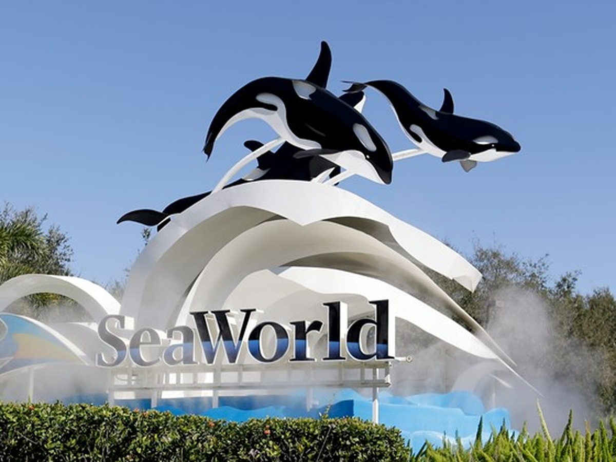 SeaWorld CEO resigns five months into job, cites board