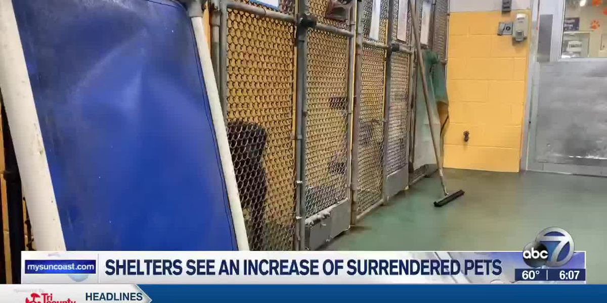 Shelters See an Increase of Surrendered Pets