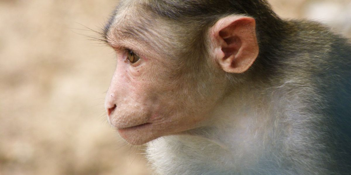 Retired research monkeys find new home in Florida