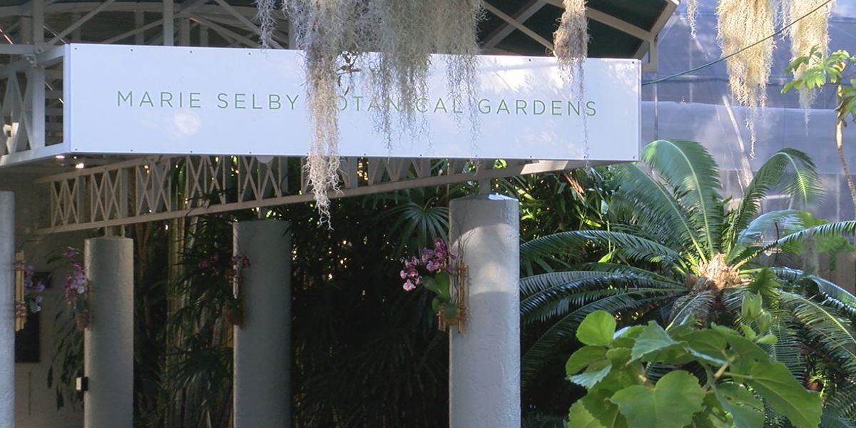 Selby Gardens staff vow to find new option for expansion