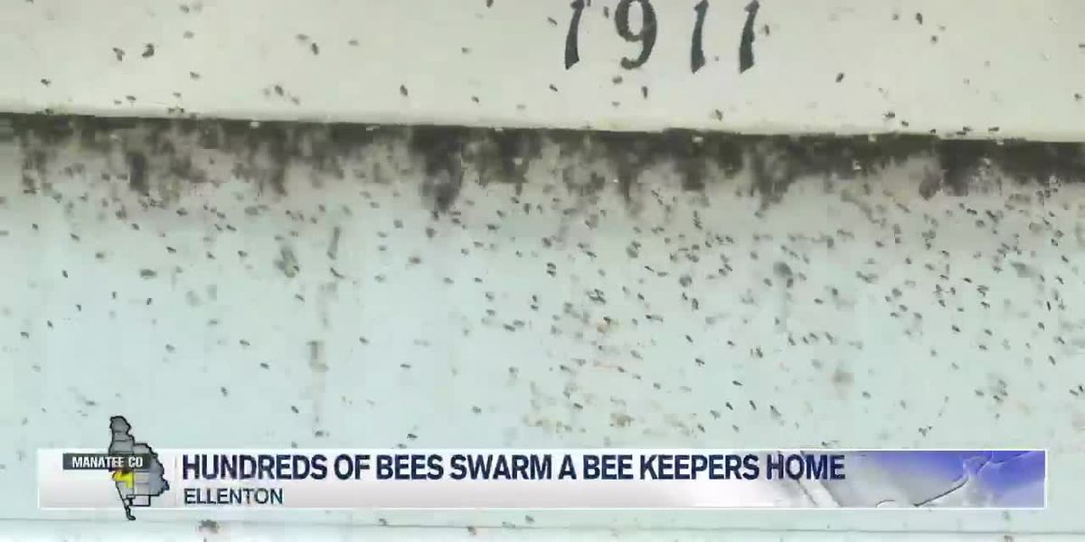 Hundreds of Bees Swarm a Bee Keepers Home