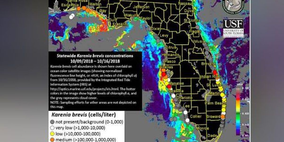 RED TIDE REPORT: Red tide levels continue to sink on the Suncoast