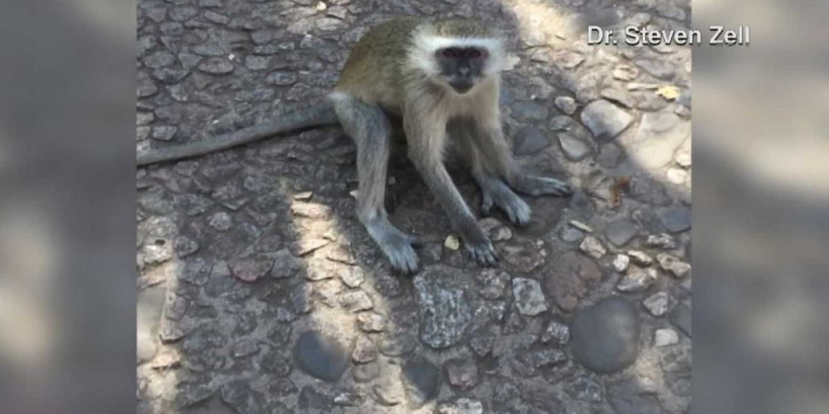 US doctor treats woman bitten by wild monkey overseas