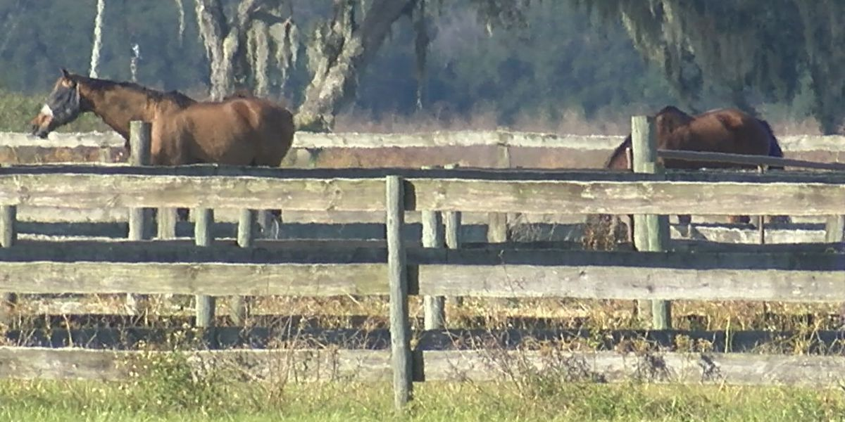 Deputies looking for suspects who stole horse, slaughtered it for its meat in Manatee County