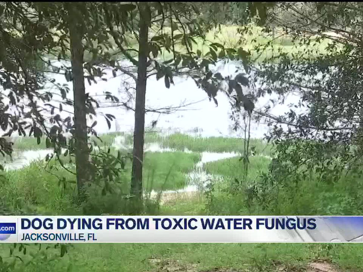 Dog dying from toxic water fungus