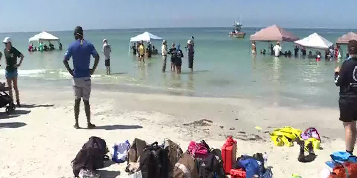 Stranded pilot whales saved from shallow Florida shoreline