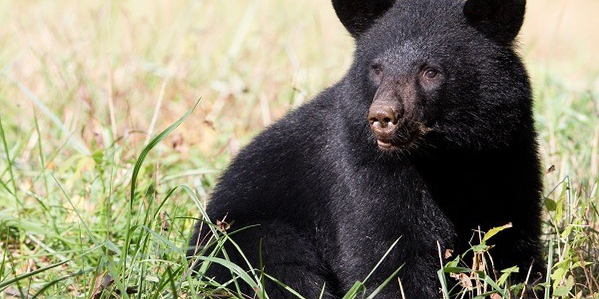Wildlife officials: Black bear kills dog in back yard