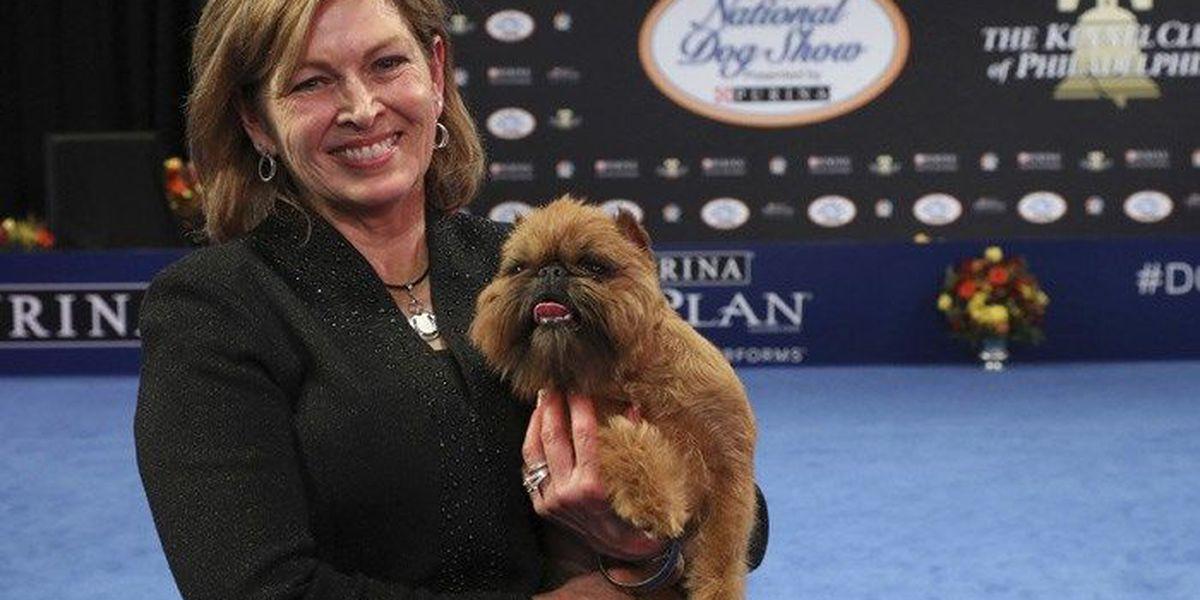 Chewbacca look-alike wins dog show