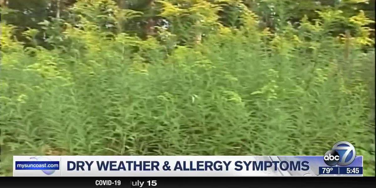 A lack of rainfall leading to an increase in allergy symptoms on the Suncoast