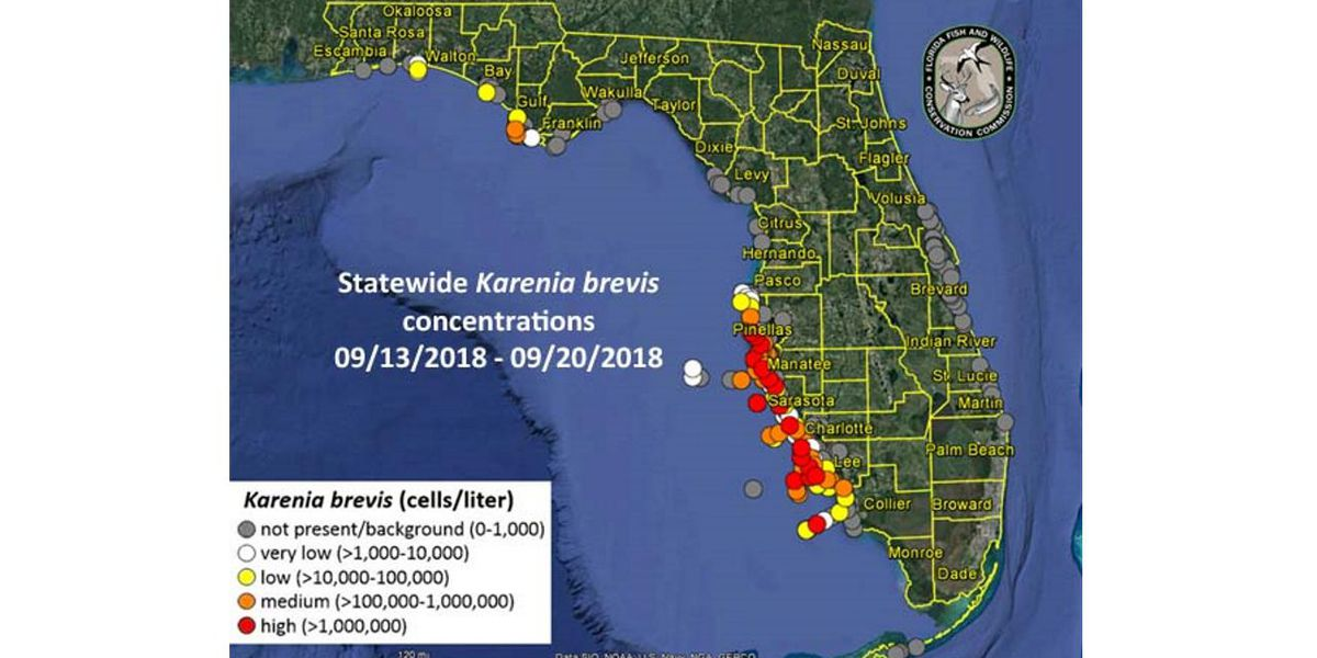 RED TIDE UPDATE: Red tide still along the shore in high concentrations