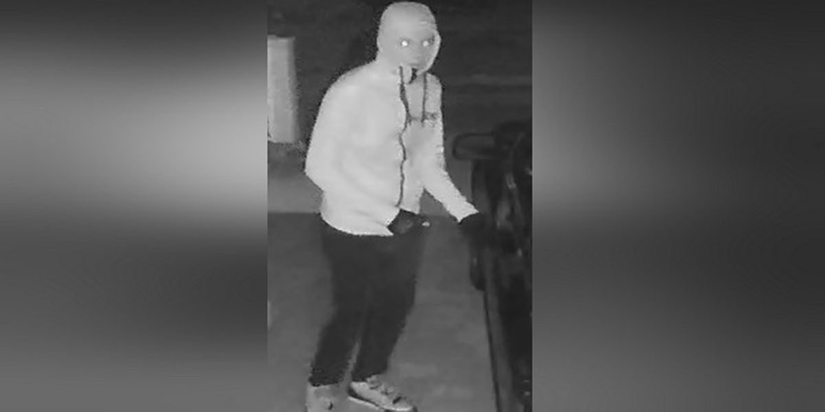 Police: Suspect on the loose for attempted vehicle burglary in North Port