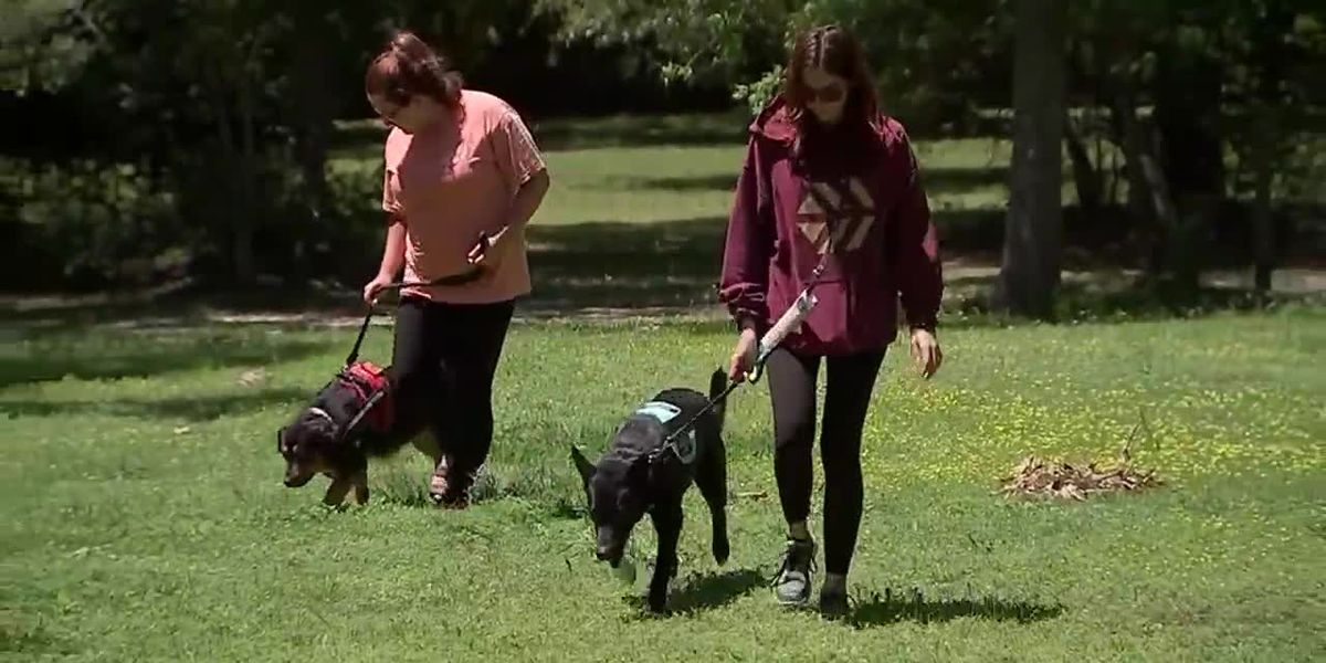 Students say service dogs not allowed in class picture