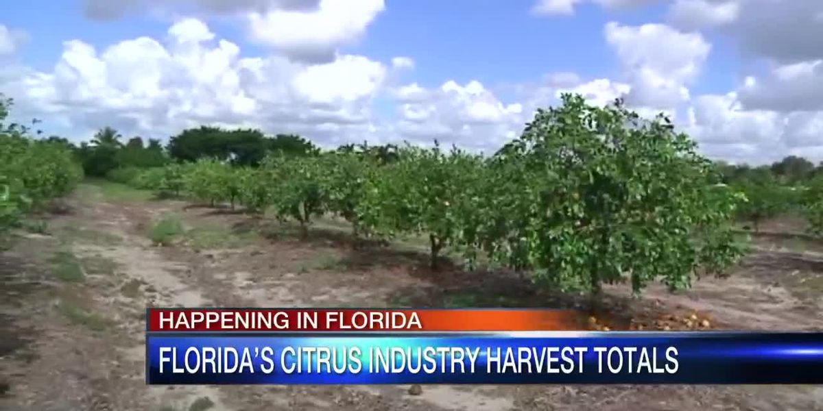 Florida citrus industry totals show another increase for 2018-19