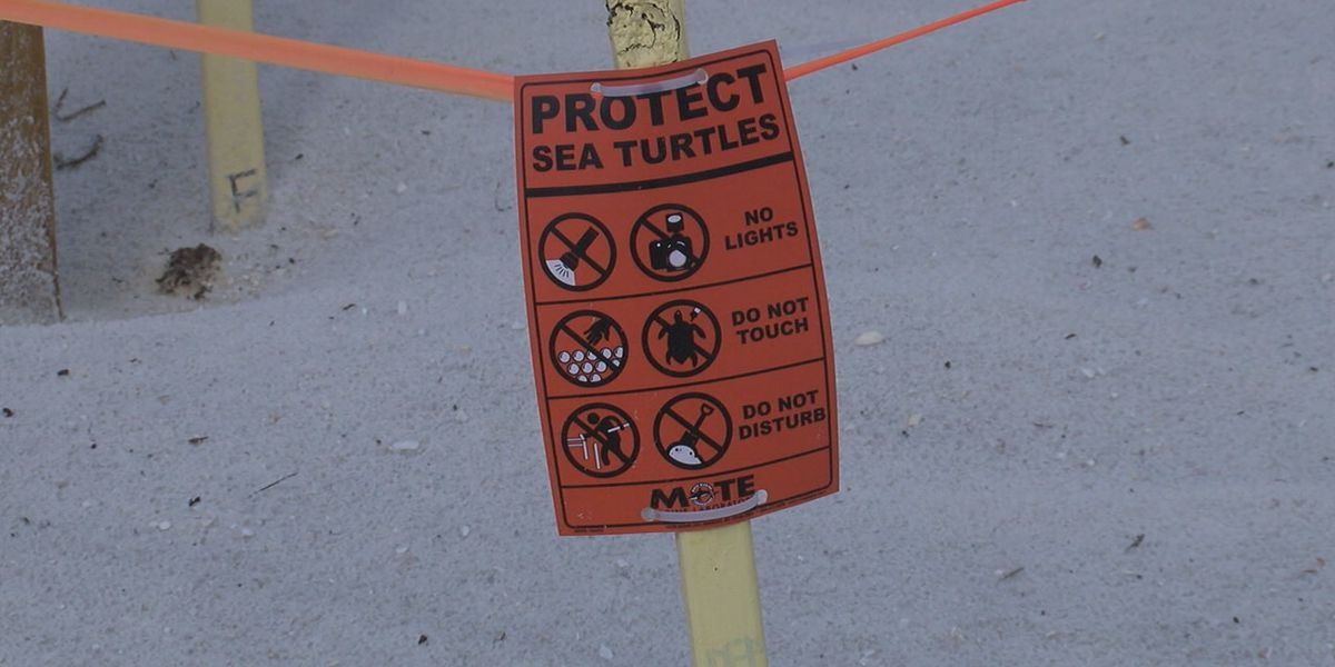 Some Siesta Key residents concerned there may not be protective netting for sea turtles during nesting season on Sunset Point Beach
