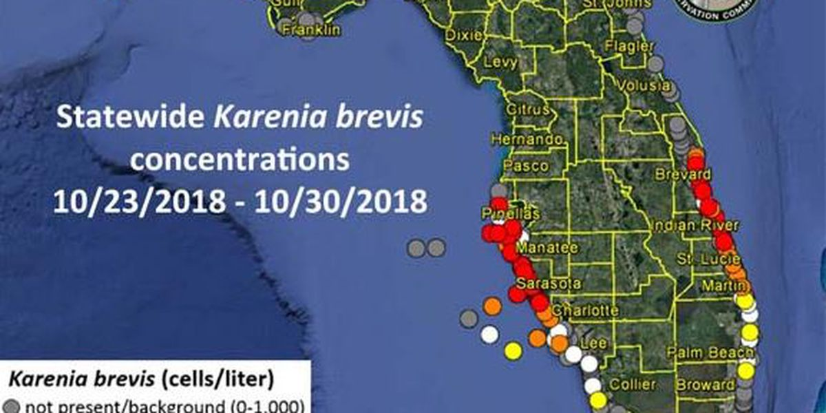 RED TIDE REPORT: High levels remain on the Suncoast