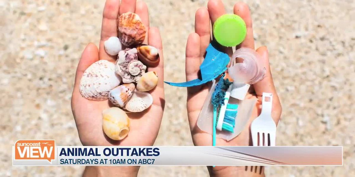 Animal Outtakes | Suncoast View