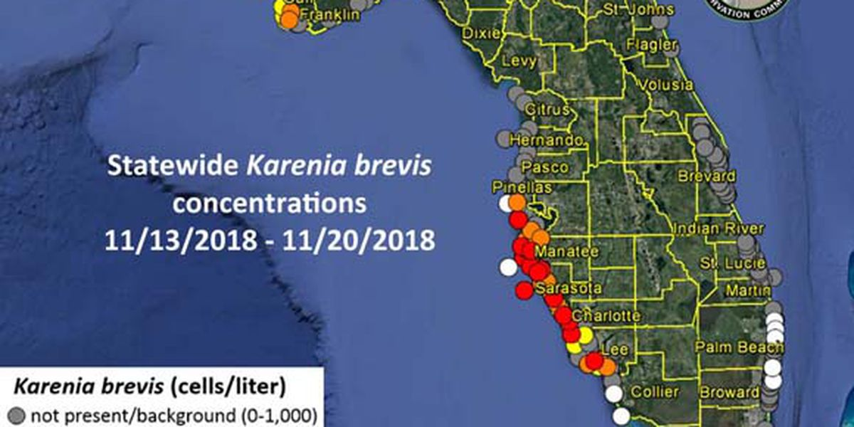 Midweek Red Tide Report Red Tide Remains Despite Cooler Temps On