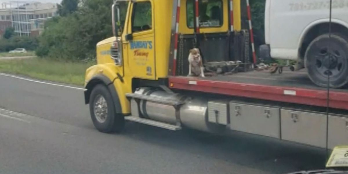 Photo of dog riding on back of moving tow truck sparks outrage