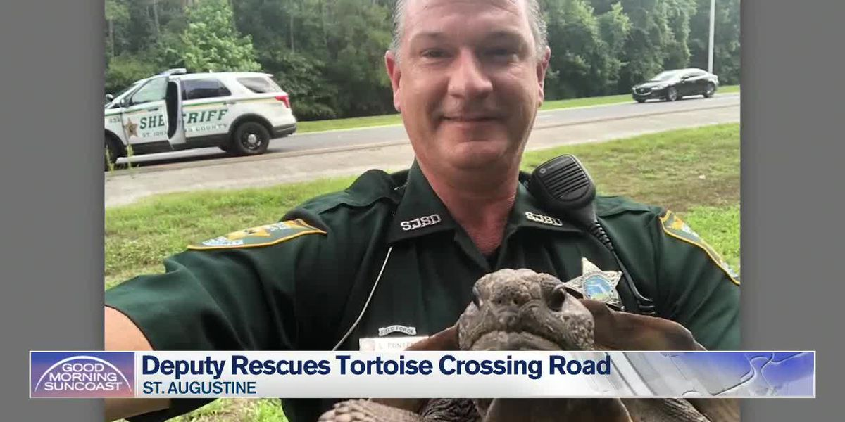 Tortoise Detained for Blocking Road