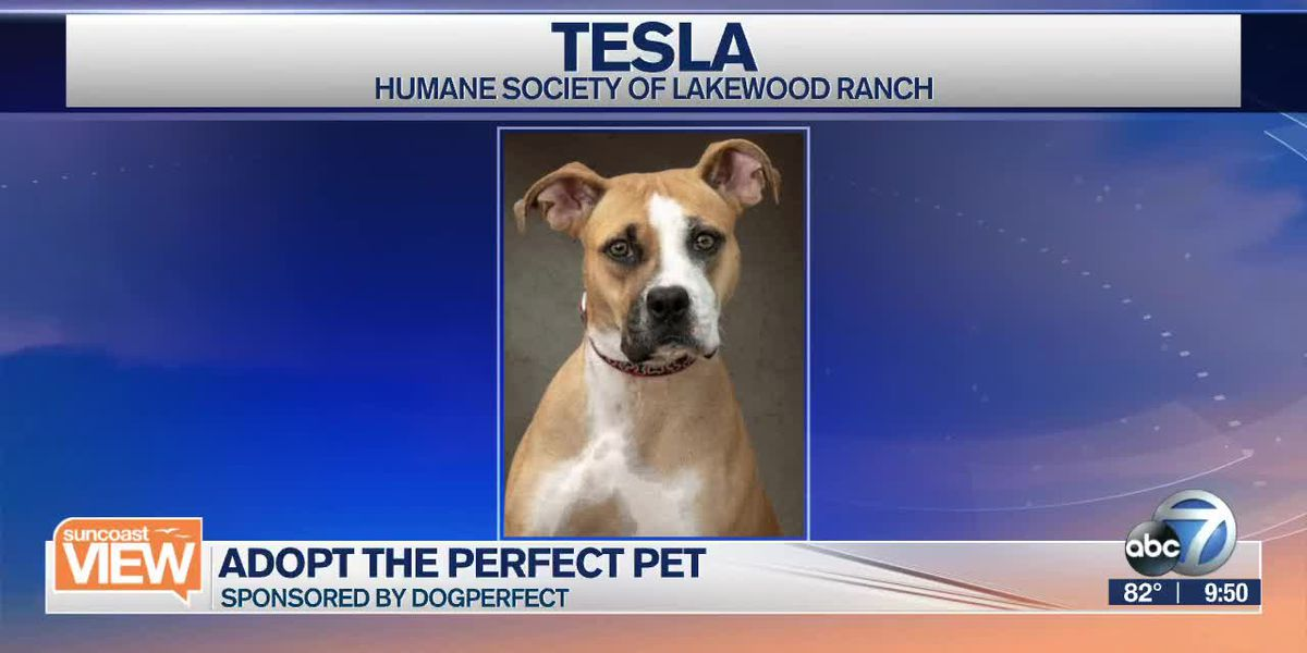 Adopt The Perfect Pet: Tesla | Suncoast View