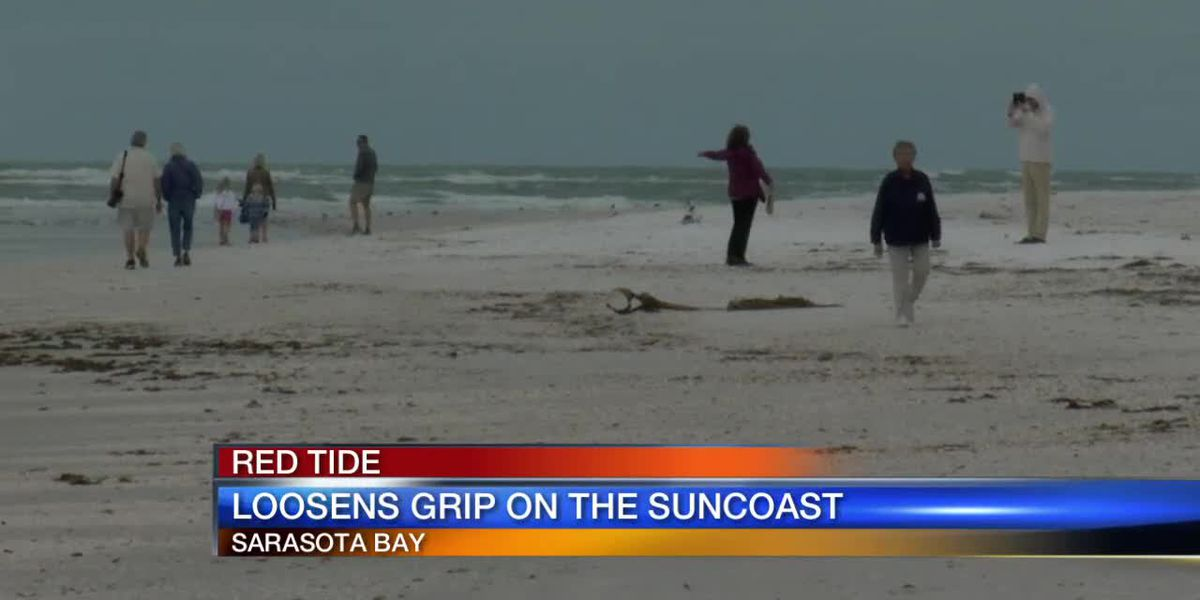 Red Tide Loosens Its Grip on The Suncoast