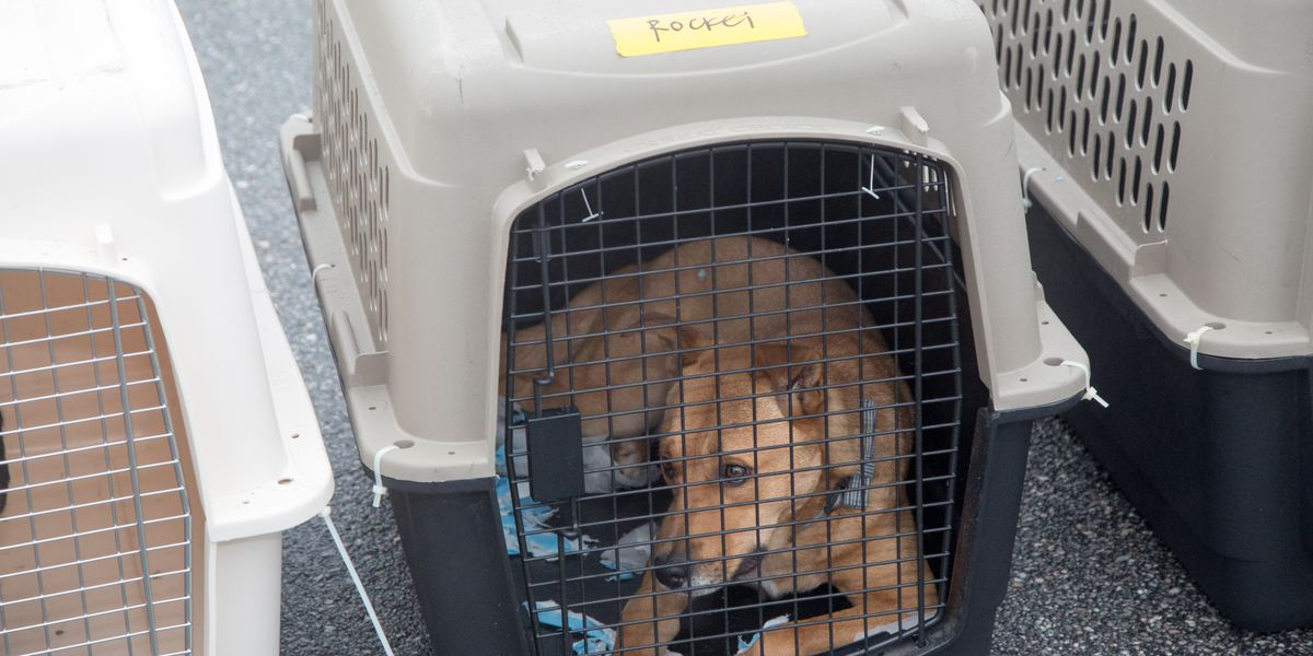 Pet Owners: Sarasota-Bradenton Airport Updates Rules on Animals in the Terminal