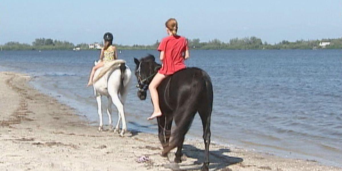 Bradenton city council members revisit topic of horseback riding on The Palma Sola Causeway