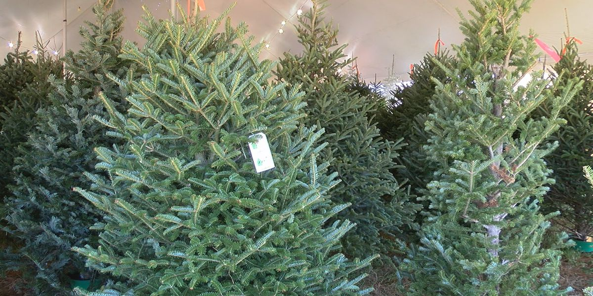 Prices on Christmas trees may cost you a little more this holiday season