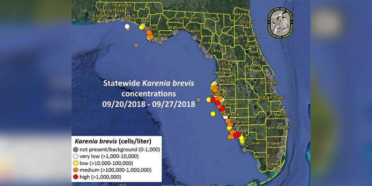 RED TIDE UPDATE: Patchy bloom along Suncoast making beaches hit or miss