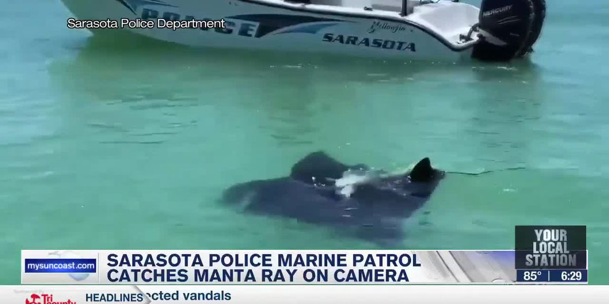 Sarasota Police marine patrol catches Manta Ray on camera