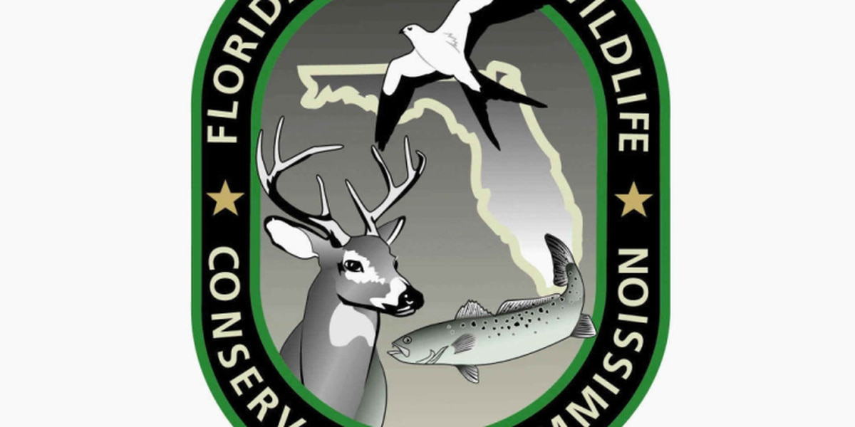 FWC clips flying squirrel trafficking operation