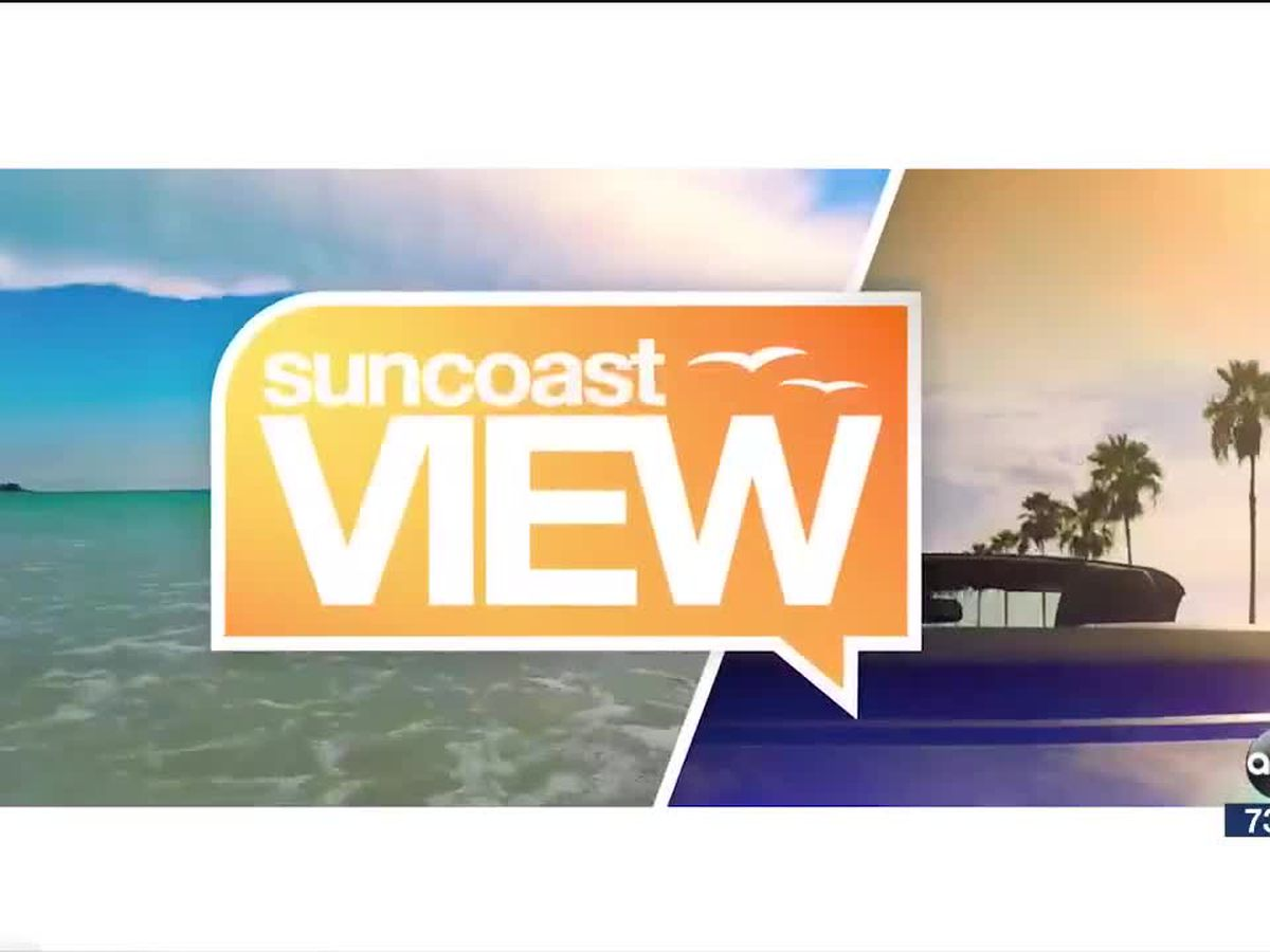 Ocean Swimming Safety | Suncoast View