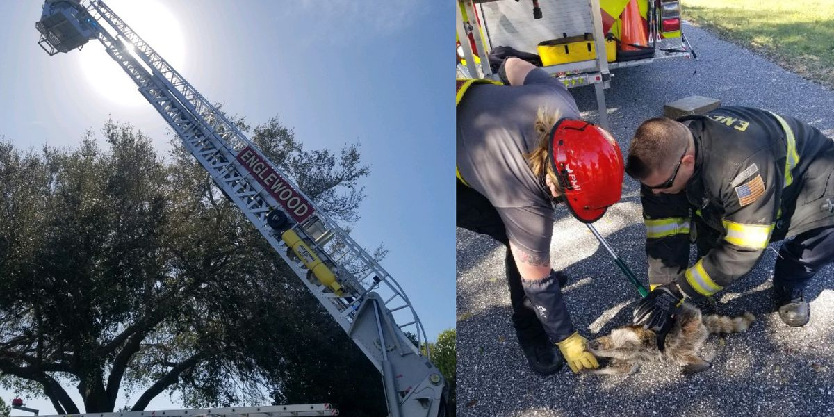 Firefighters rescue raccoon with jar on its head that ran up tree