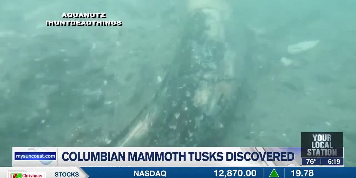 Mammoth tusks found off Florida's coast from Aquanutz Scuba Diving Charters