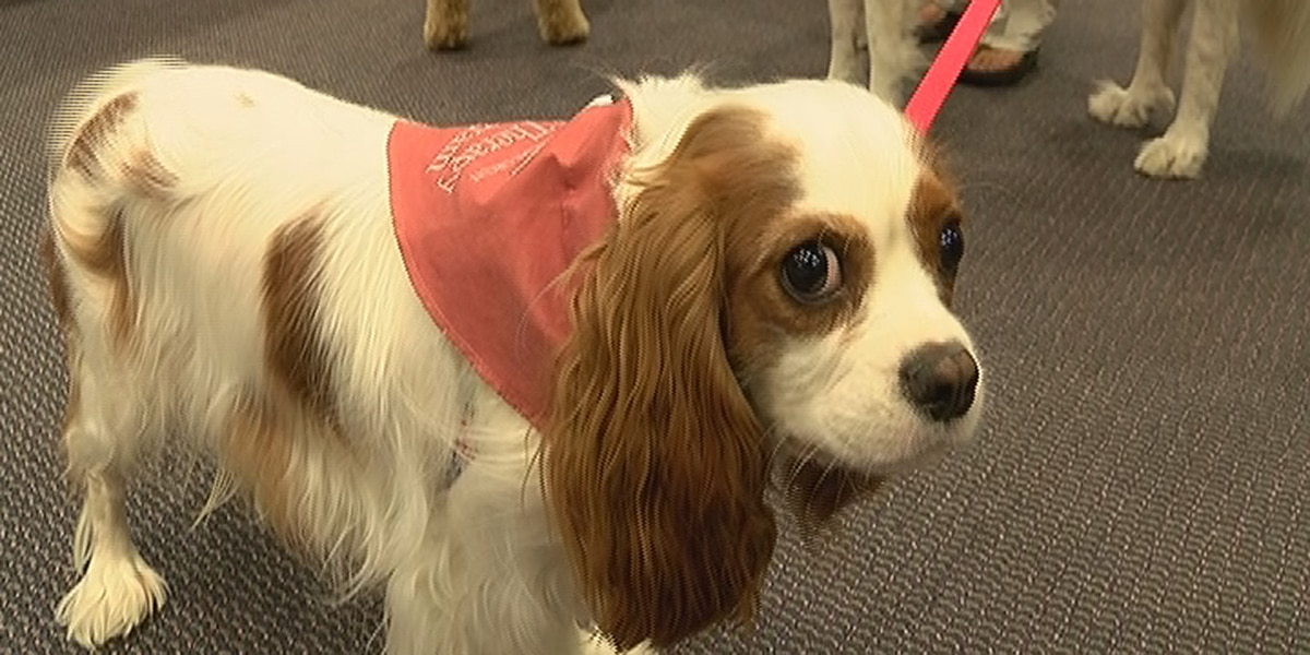 Canine court companions officially sworn in to Sarasota County pet therapy program