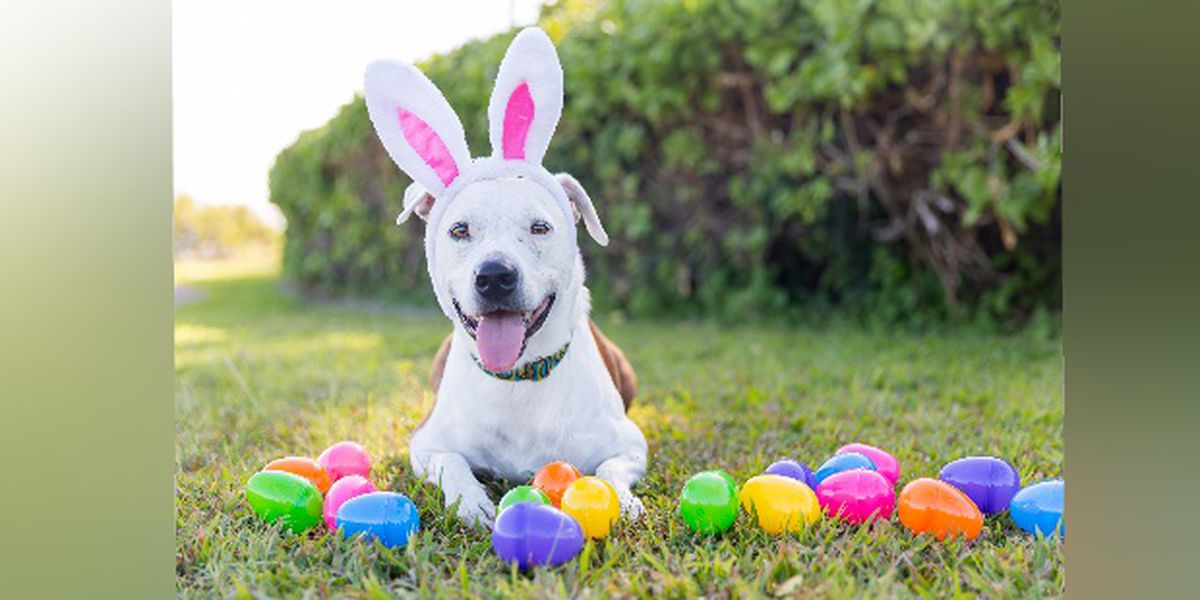 Bring your dogs to an egg hunt at Arlington Park in April