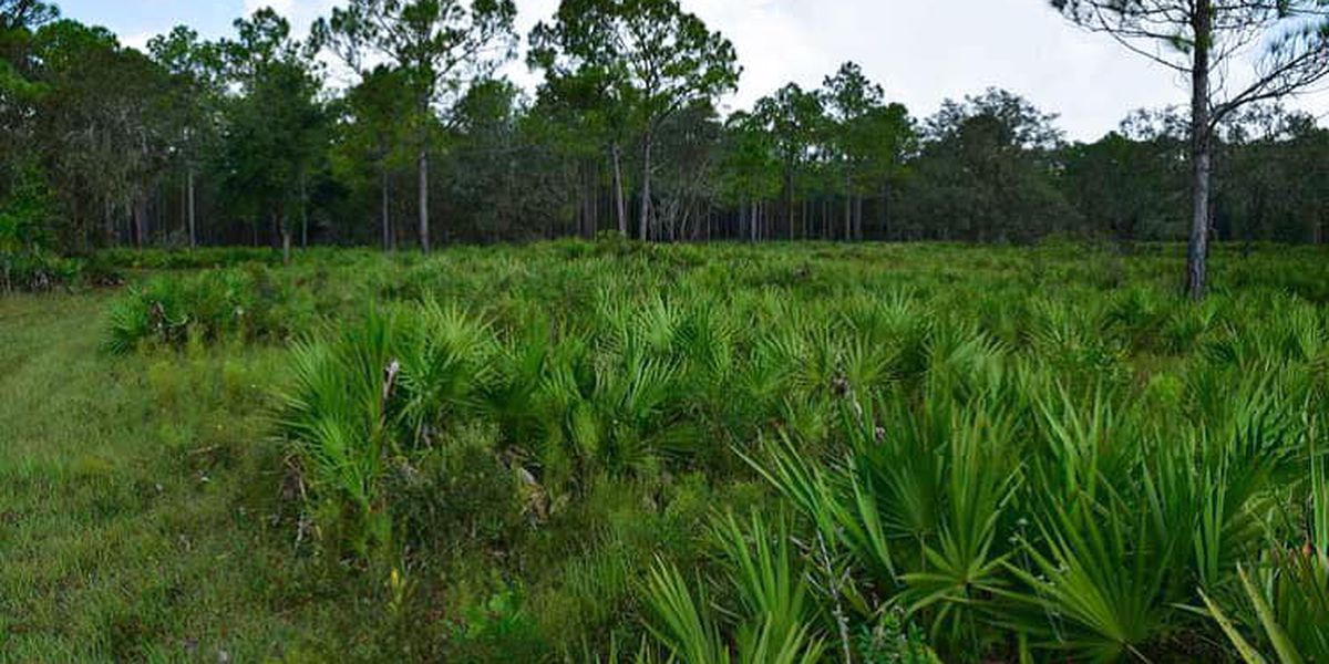 State to purchase, preserve 5,777-acre Orange Hammock Ranch in Sarasota County