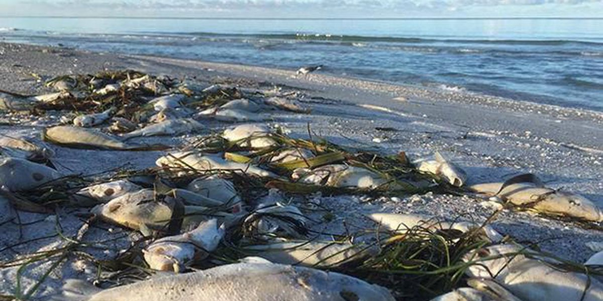 Experts: Red tide was among 5 worst in Florida's history