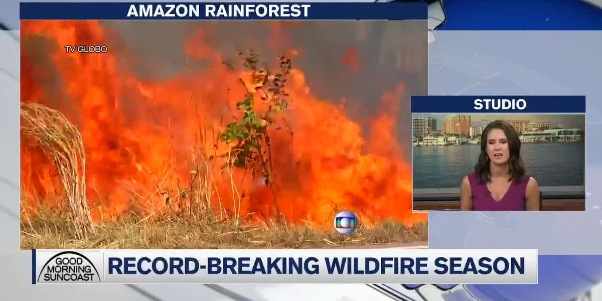 Fires Ravage Amazon Rain Forest