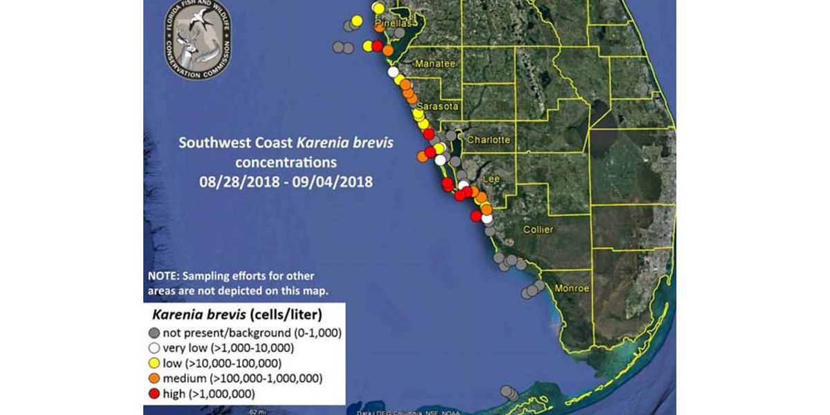 RED TIDE UPDATE: Bloom still along Suncoast, but conditions improve