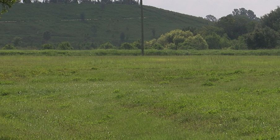 Sarasota County asking for public opinion on future of land near the celery fields