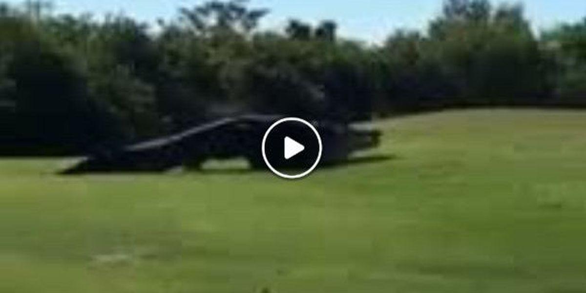 VIDEO: Monster alligator strolls across Buffalo Creek Golf Course