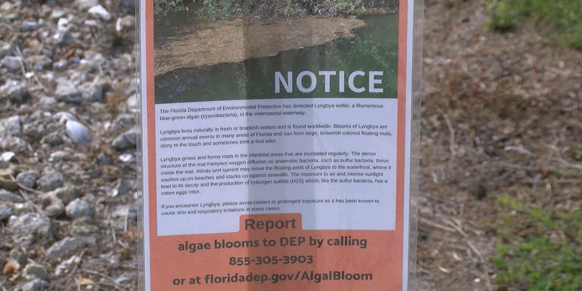 Algae blooms affecting some waterways in Sarasota County