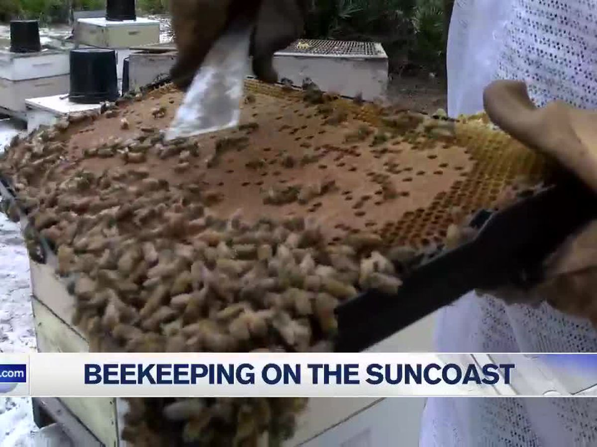 Keeping beehives thriving on the Suncoast as bee problems persist